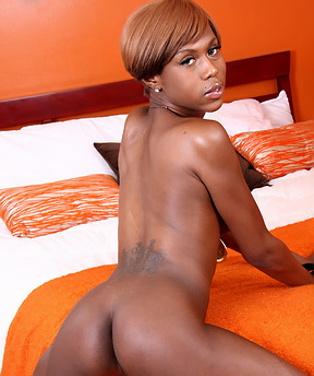 Ebony Shemales Galleries